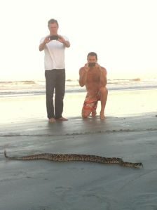 snakeonbeach